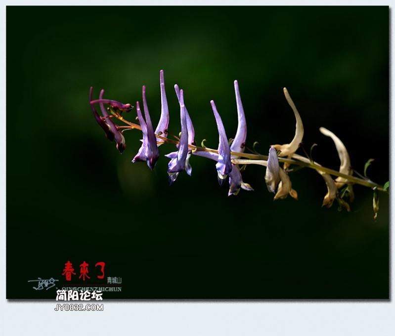 青城之春——44.jpg
