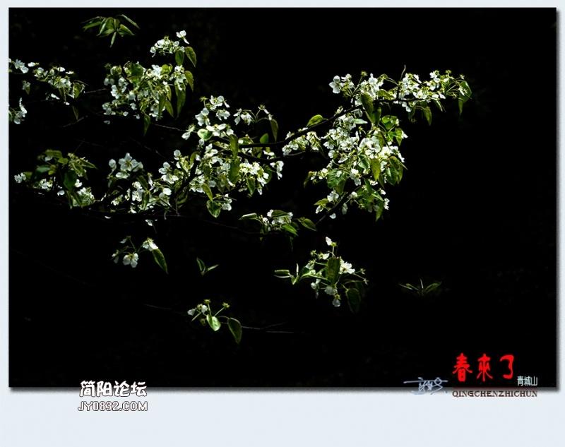 青城之春——46.jpg