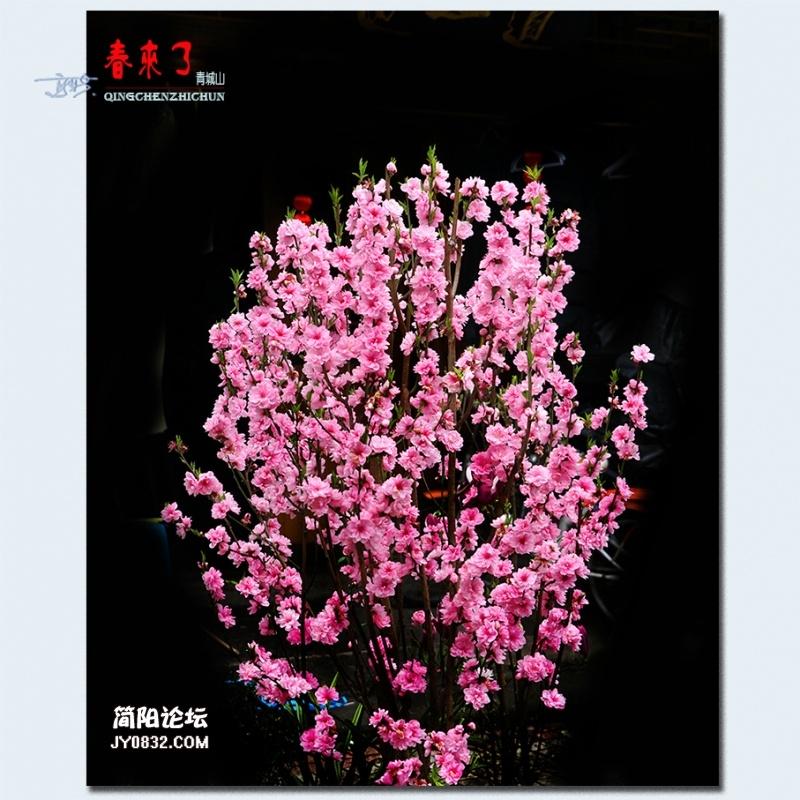 青城之春——49.jpg
