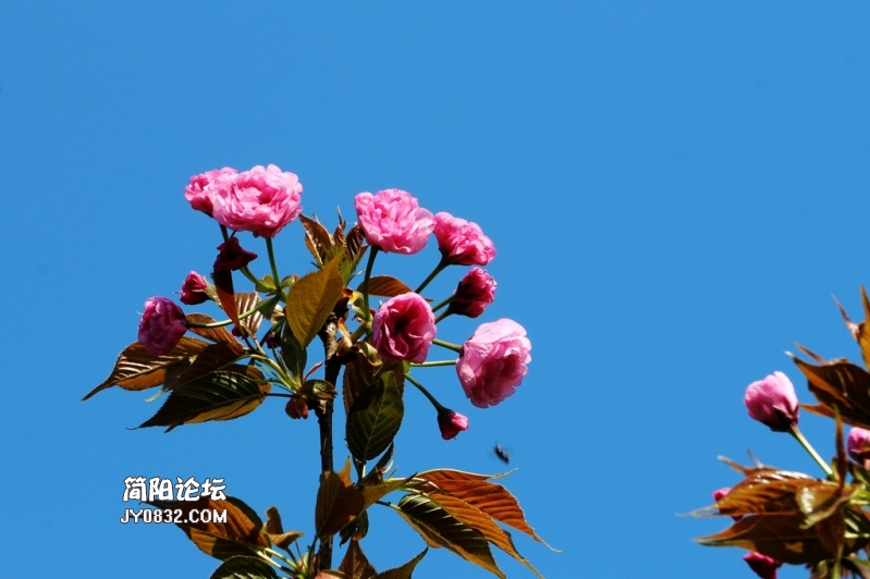 IMG_6121.jpg