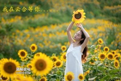 """今年国庆不远行 只为云合就有那片""""海"""""""